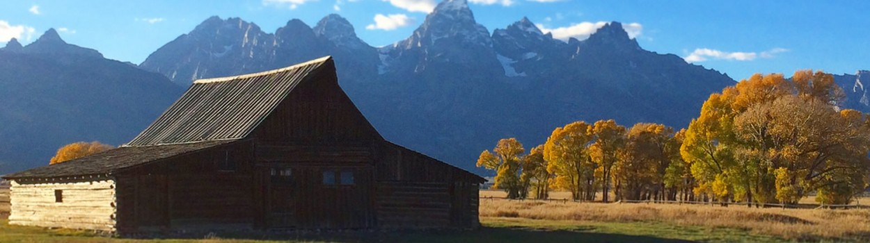 Barn, Tetons, Mormon row, Aspens, Fall, Jackson Hole